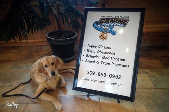 Dog Training Central Illinois